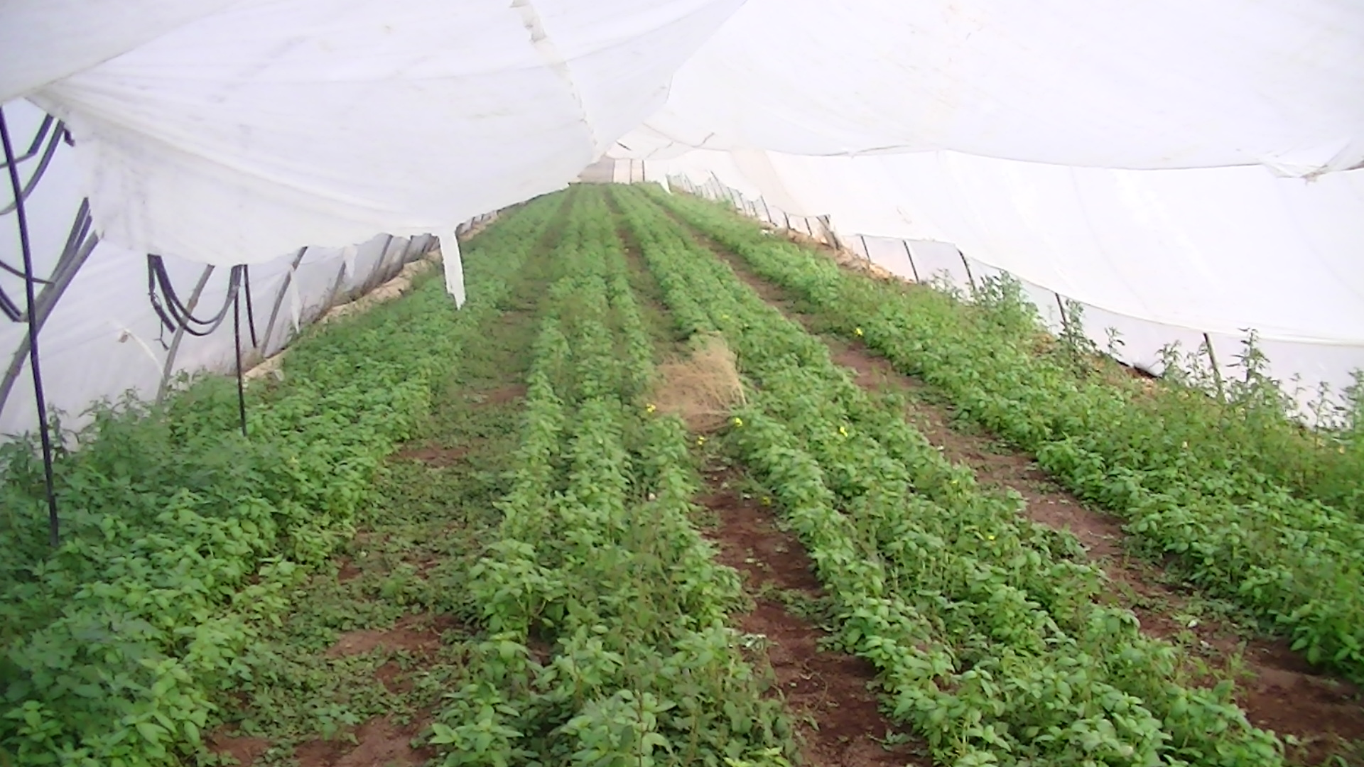 Greenhouses in the settlement of Na'ama, picture taken by Corporate Watch in January 2013