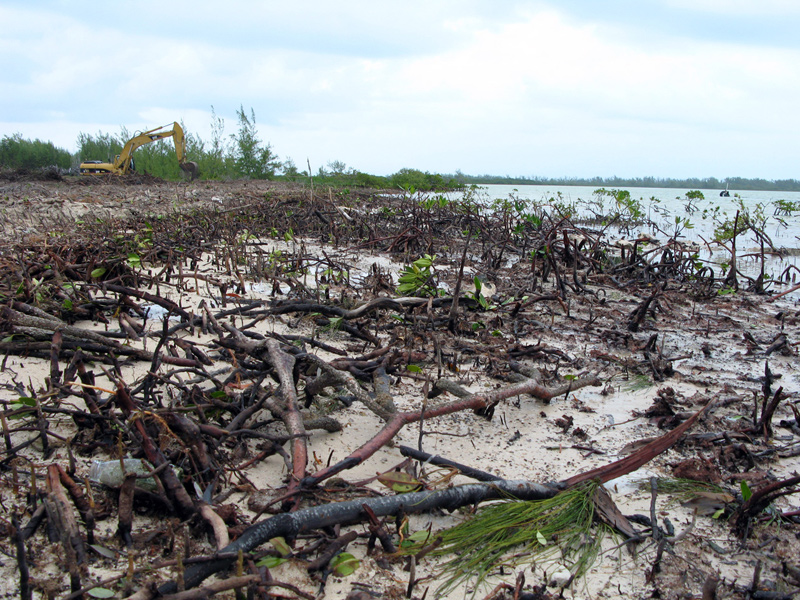 Mangrove excavation.jpg
